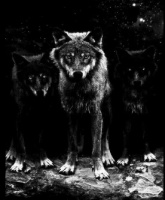 "alt=""Wolf pack"""