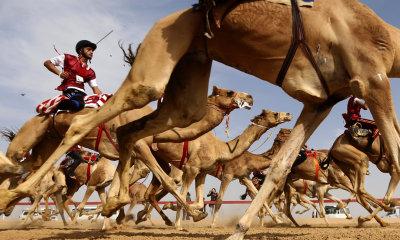 """alt=""""Abu Dhabi Camel Race"""""""