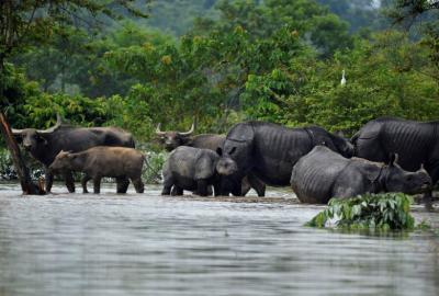 "alt=""Monsoon floods across South Asia | Pictures | Reuters"""