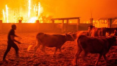 """alt=""""Portugal and Spain wildfires: Dozens dead and injured"""""""