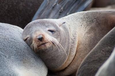 """alt=""""Hot Heads: Why Mammals Need R.E.M. Sleep"""""""