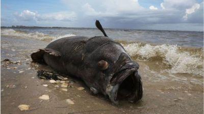 "alt=""Red tide: Florida powerless to stem killer algae bloom"""