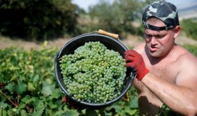 """alt=""""Santé! French wine output set for rebound as harvest races ahead"""""""