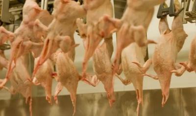 """alt=""""US ambassador to UK under fire over defence of chlorinated chicken"""""""