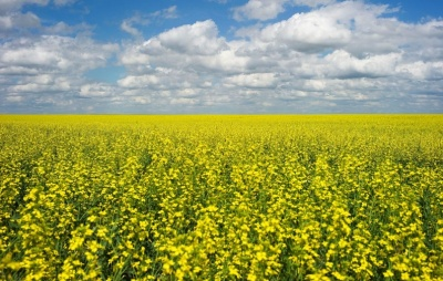 """alt=""""Canada says third canola exporter has run into trouble in China"""""""