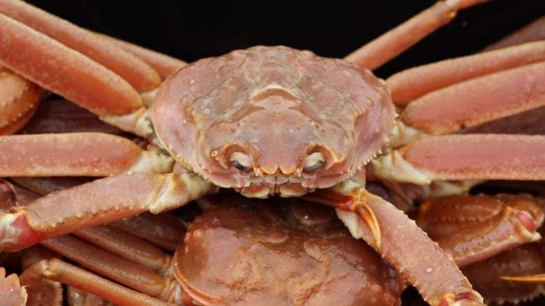 """alt=""""Climate change now a fact of life in Atlantic Canada fishery"""""""