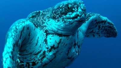 """alt=""""Oil & gas out of N.L. marine protected areas, welcome in marine refuges"""""""