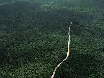 """alt=""""How to Make Money Off Rainforests Without Cutting Them Down"""""""