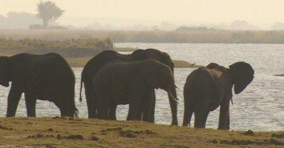 "alt=""Botswana lifts ban on elephant hunting"""