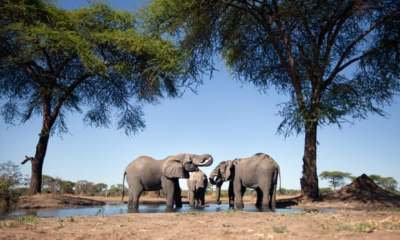 """alt=""""Namibia forced by drought to auction 1,000 wild animals"""""""