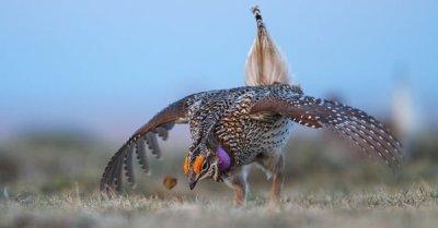 "alt=""Prairie bird populations plummet by 57%, report suggests"""