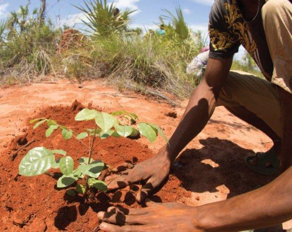 Tree Planting & Irrigation System Installation