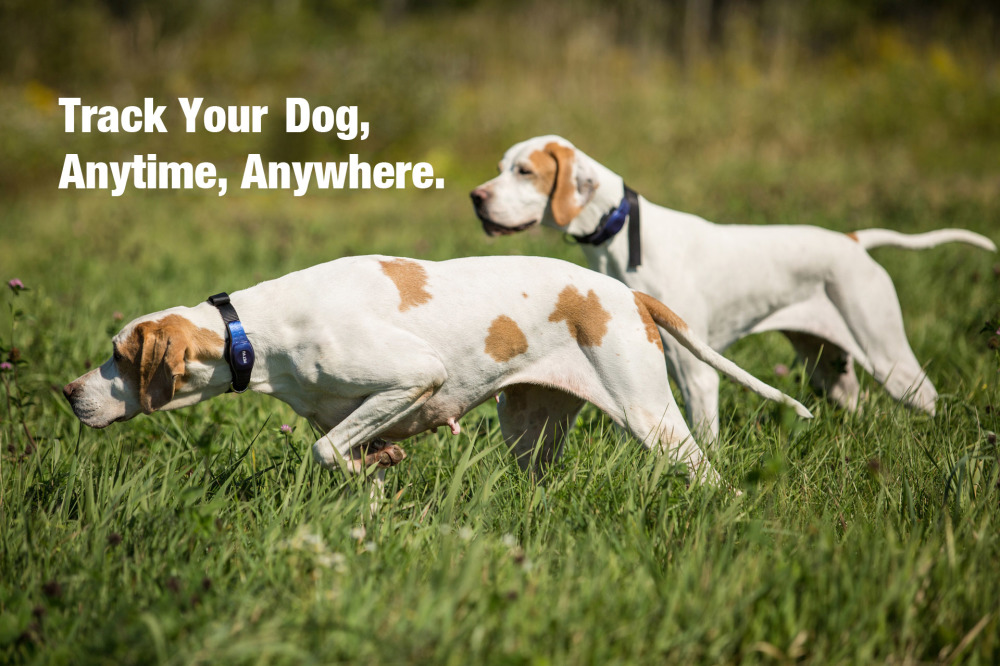 TRACK YOUR DOG ANYWHERE