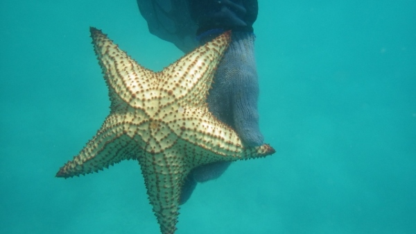 Star Fish Found Snorkeling Around the Boat