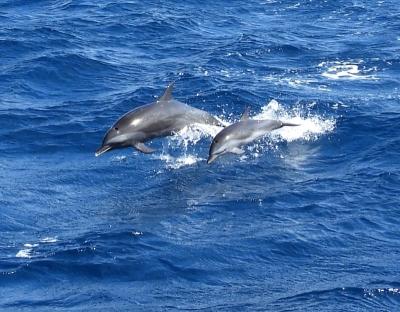 Dolphins Alongside Smoke and Roses