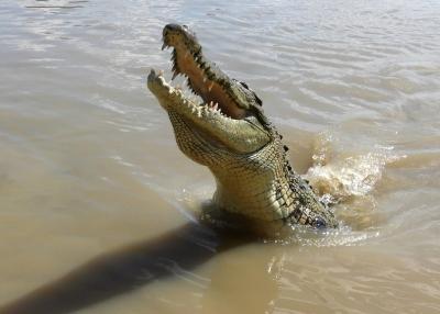 Stranded In Darwin