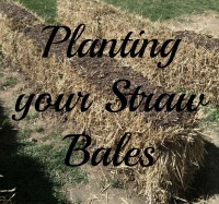 Planting your Straw Bales