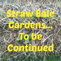 Straw Bale Gardens... To be Continued