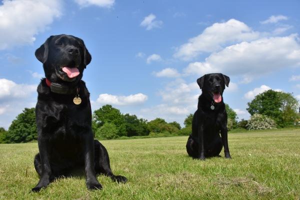 Codie-Bear & Marvin