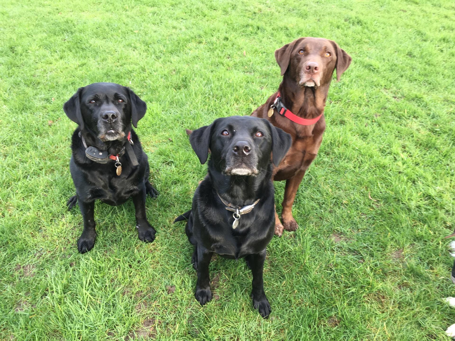 Codie-Bear, Marvin & Ruby
