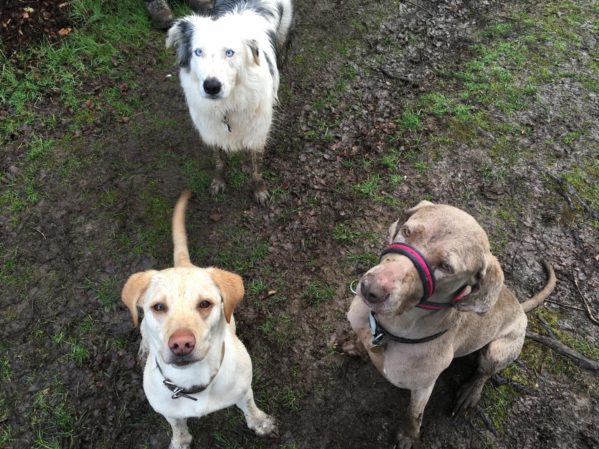 Oddie, Lily & Marley-Moo