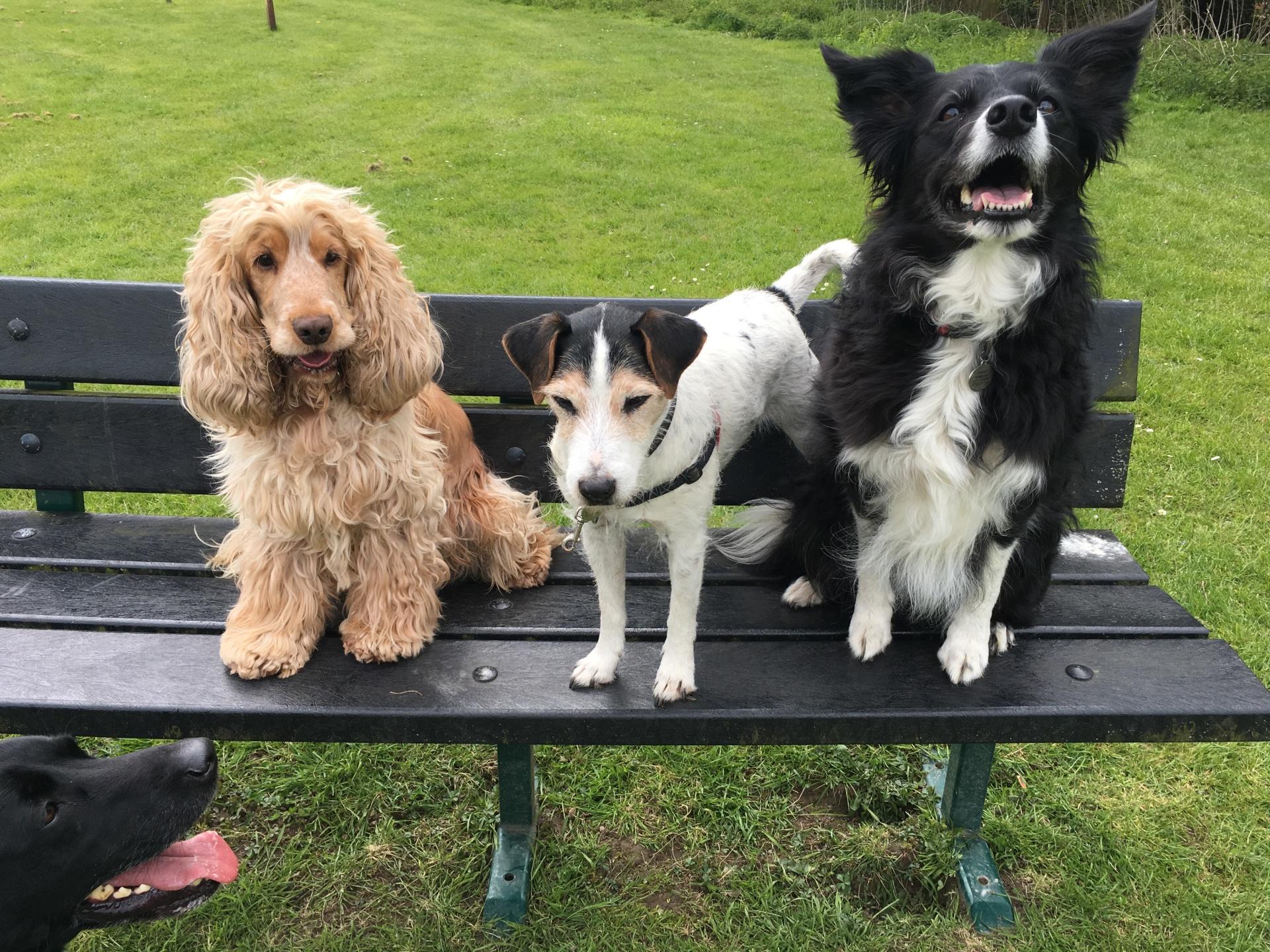 Murphy, Buddy & Bernie