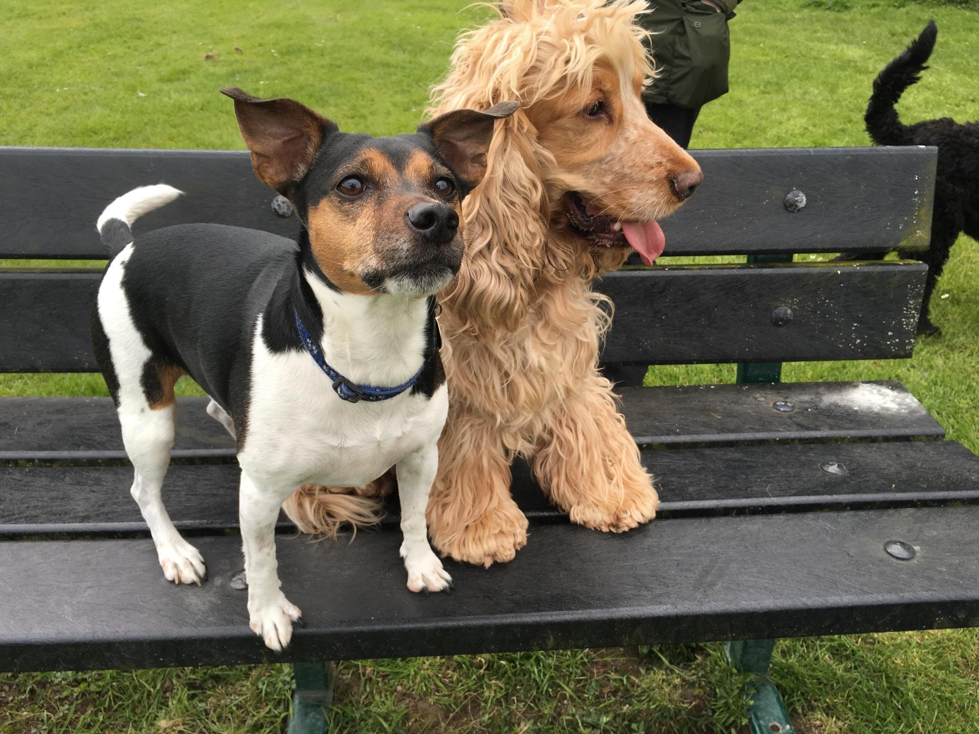 Daisy & Murphy
