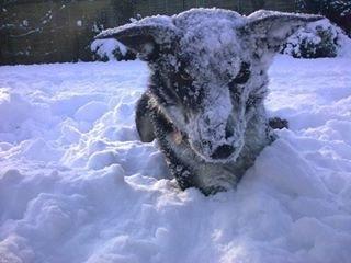 DanDan in the snow
