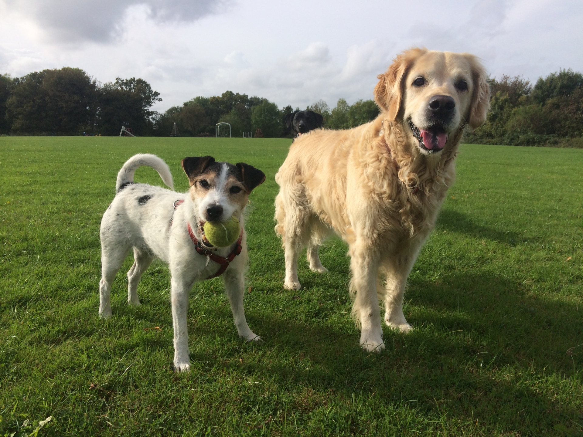 Buddy & Holly