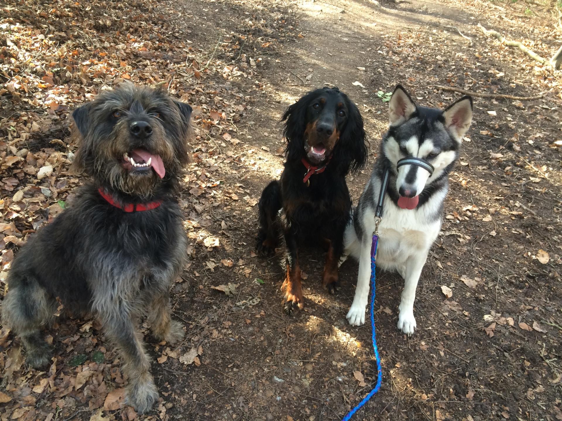 Curro, Lexxi & Kaya