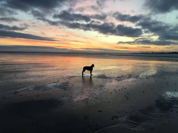 Lexxie Sunset