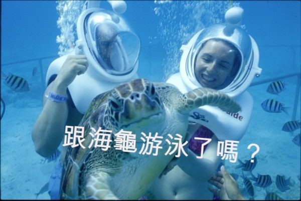 跟海龜游泳了嗎?