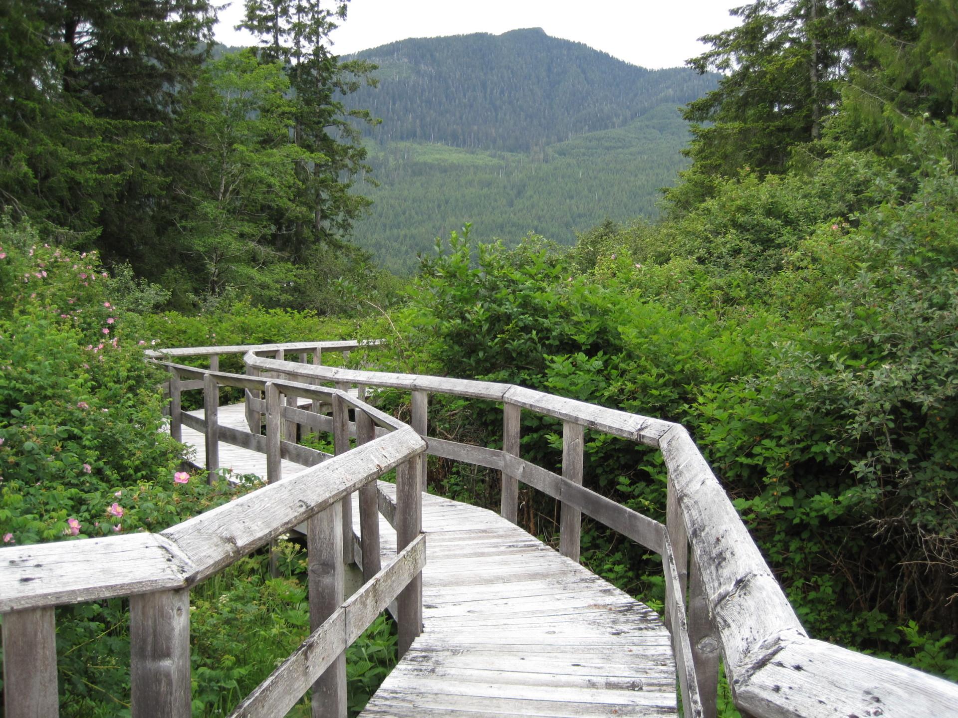 Boardwalk to lookout, Leiner River Estuary Trail