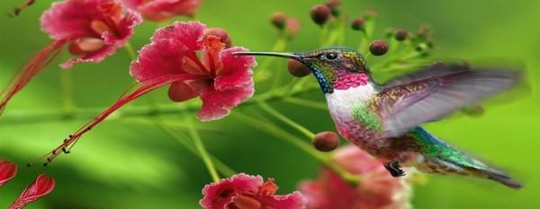 bird watching Peru