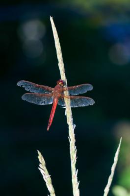 "<img alt=""libellule dragonfly"">"