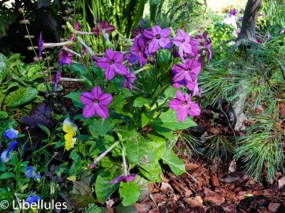 Plants, flower, purple, fragrance, smell, delicate