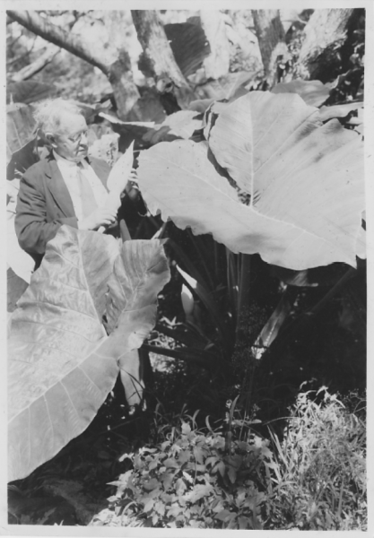 AC examining flowers in Samoa