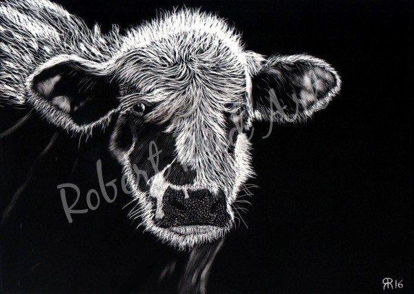"""""""Cow Lick Expert"""" - FOR SALE"""