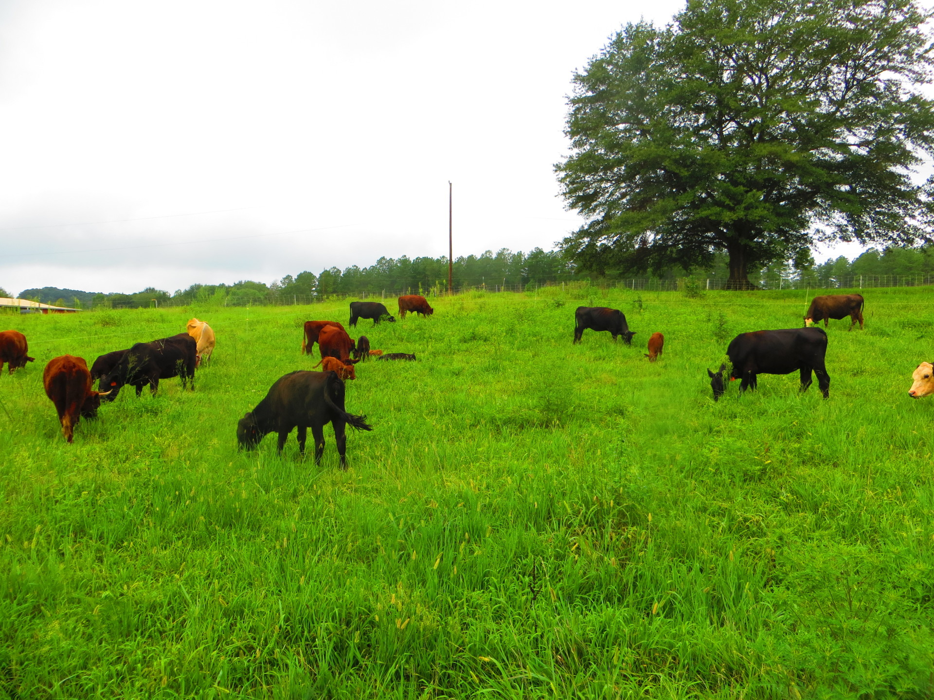 Contented Grazing