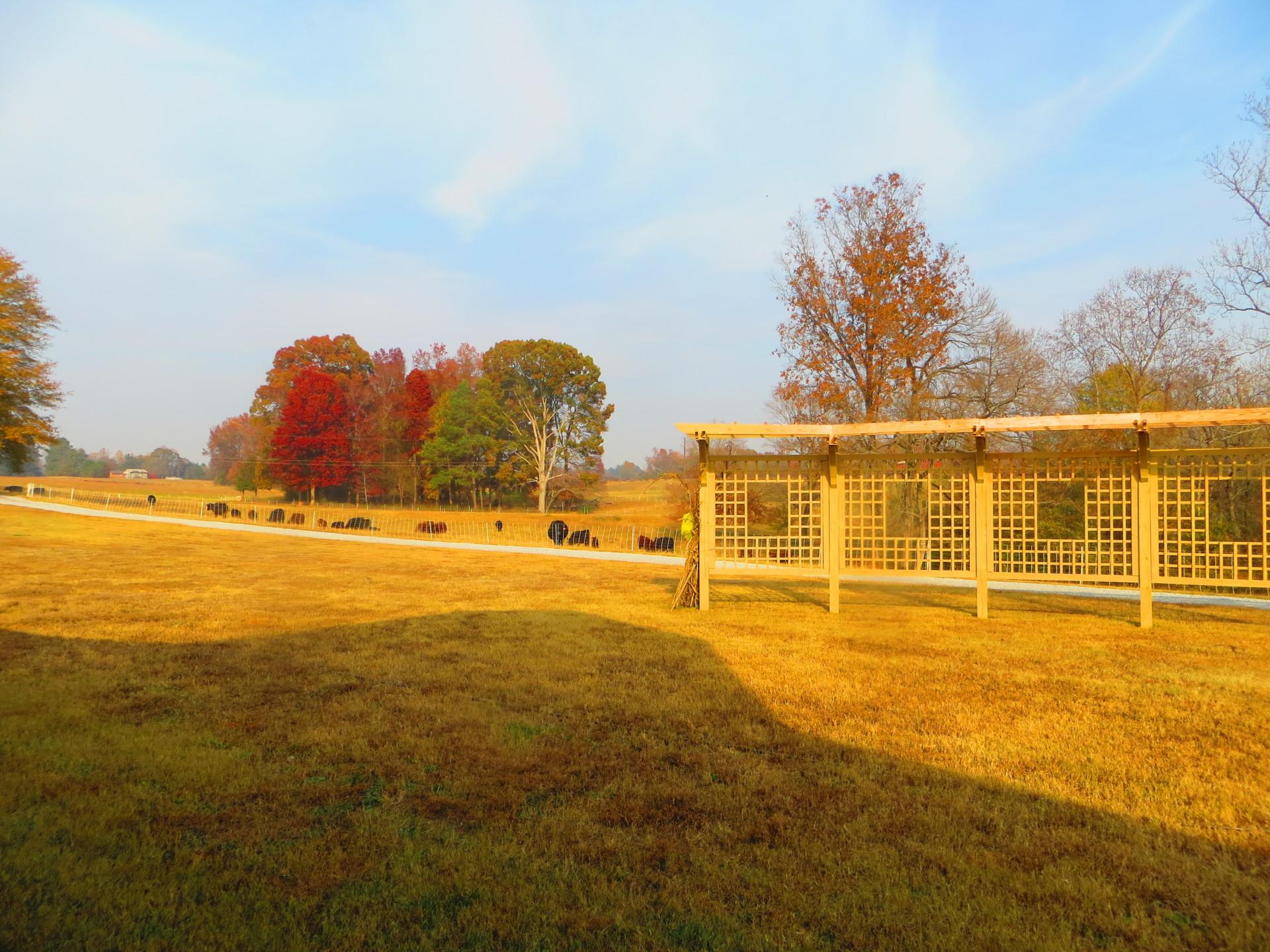 Wedding Lawn in Fall