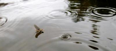 Hendrickson's On The Water