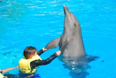 Swimming with Dolphins in Cancun   my son's birthday!