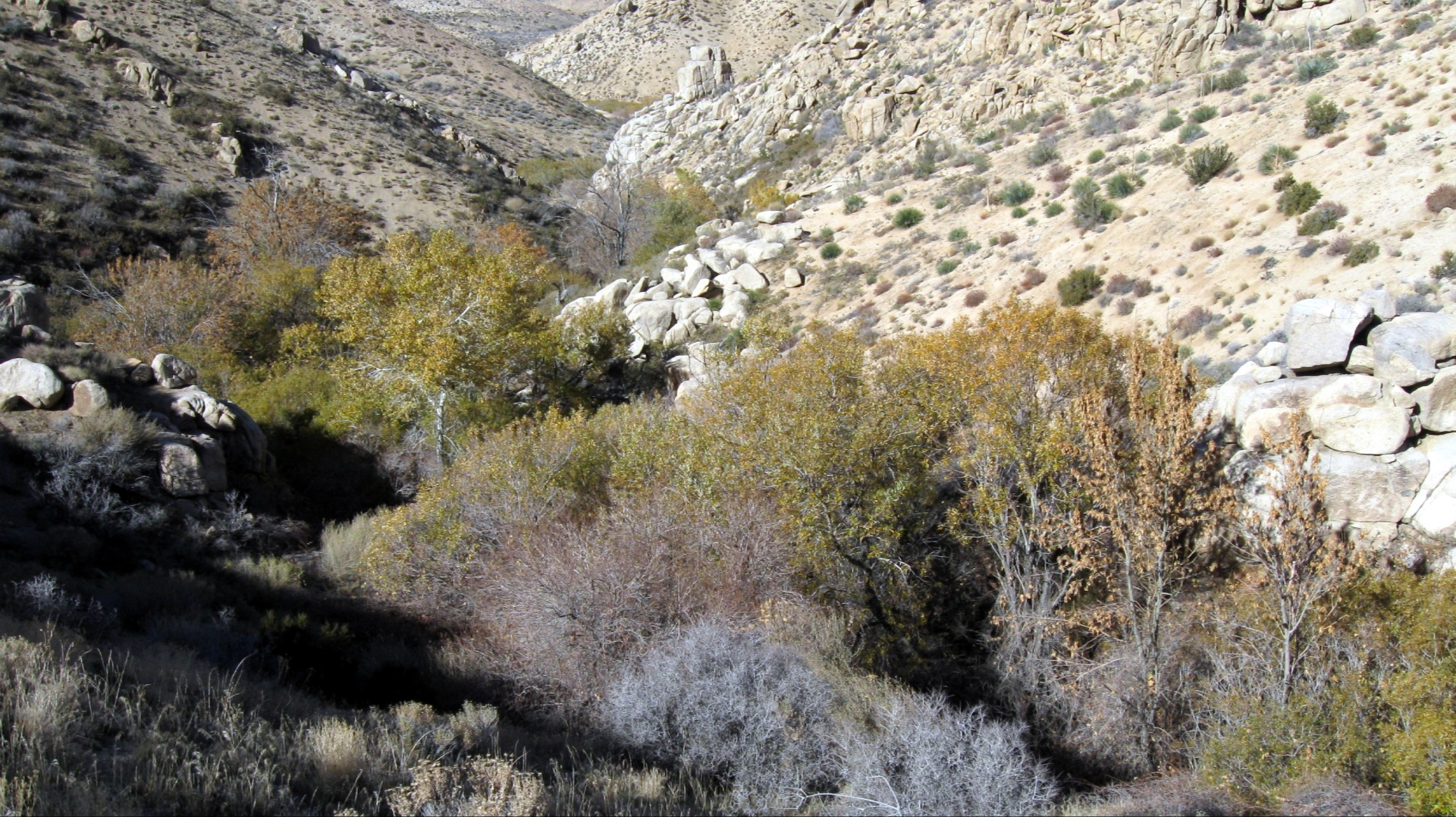 riparian area in Arrastre Canyon