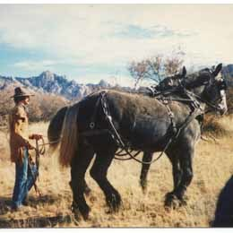 Bo and PercheronTeam