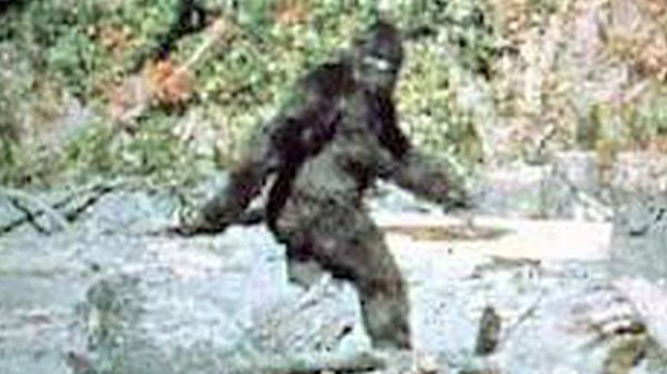 """Bigfoot"" was a journalistic term generated in the middle of the last century during a rash of sightings in Northern California."