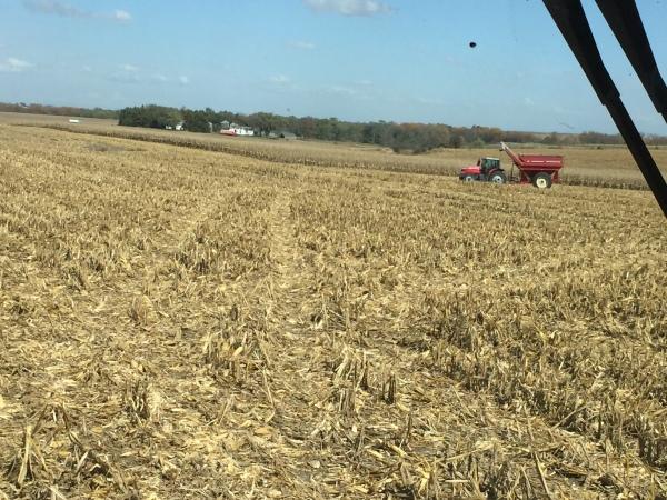 Corn Squatch