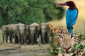 Wild Life Sanctuaries