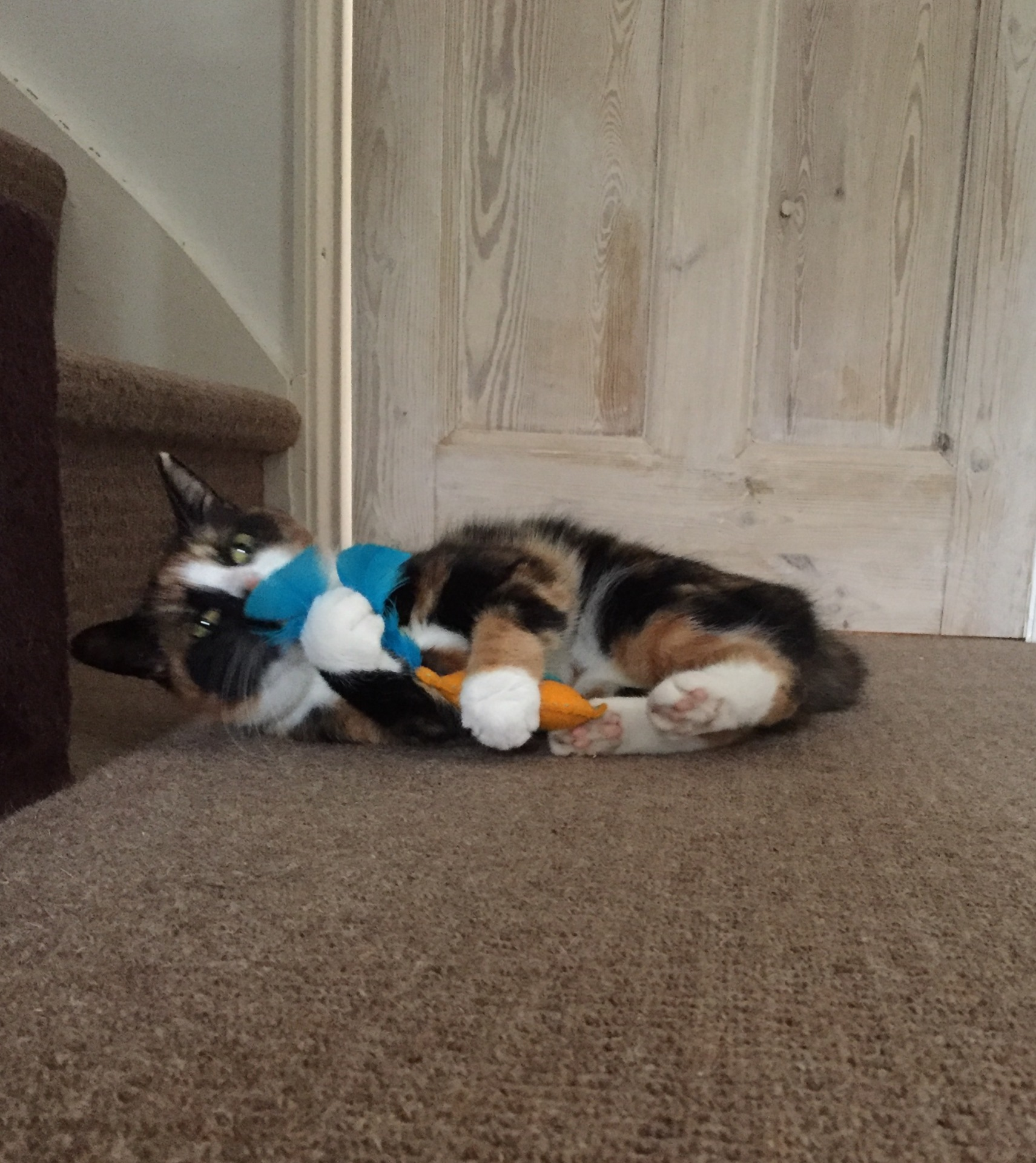 My cat Pixie with her hand-made cat toy