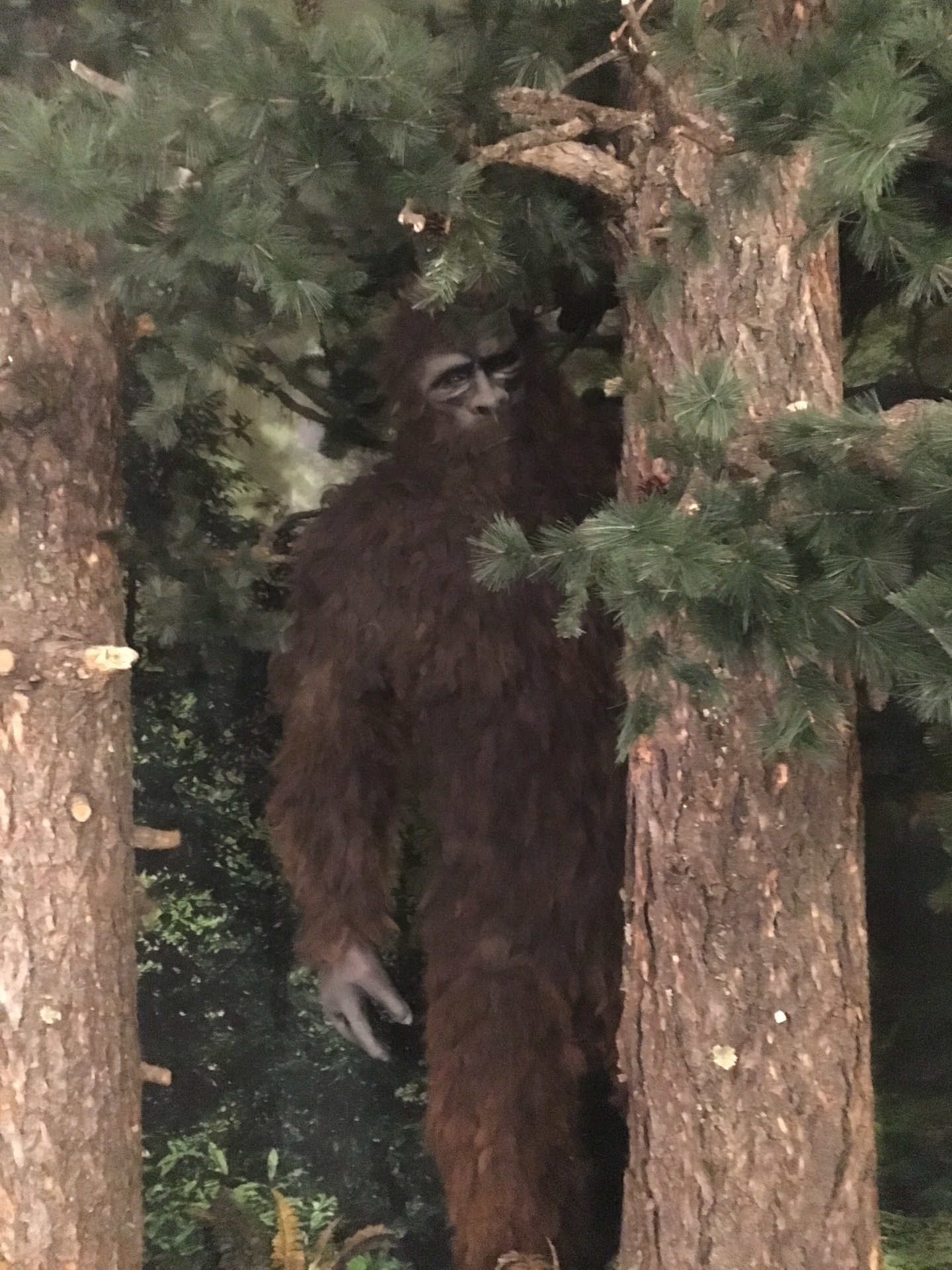 Grand Opening of the Sasquatch Encounter