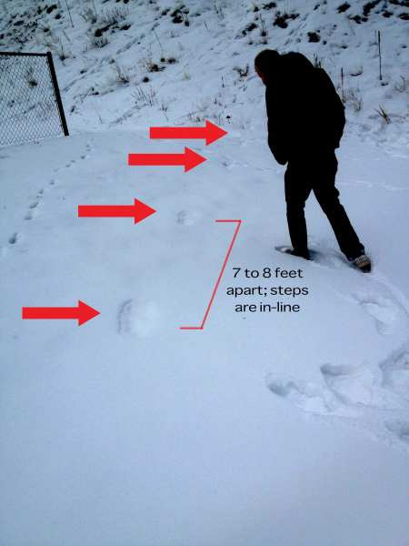 First Tracks found in Bailey